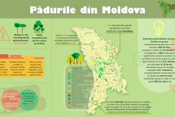Plantăm fapte bune în Moldova